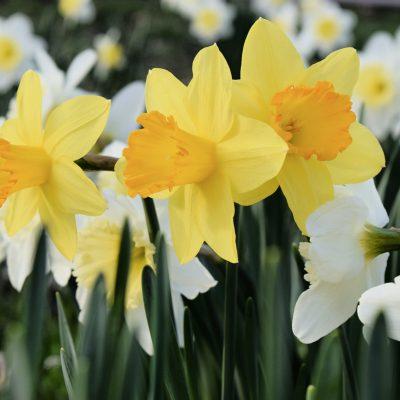 Ahh…Spring